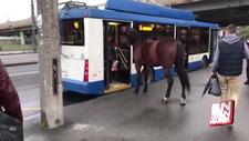 Otobüs bekleyen at