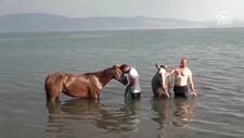 Yarış atlarına Van Gölü'nde antrenman yaptırıyor