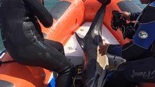 Samsun'da sığ suda sıkışan yunus botla kurtarıldı