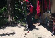 Zonguldak'taki yılan timleri zehirli yılanı yakaladı